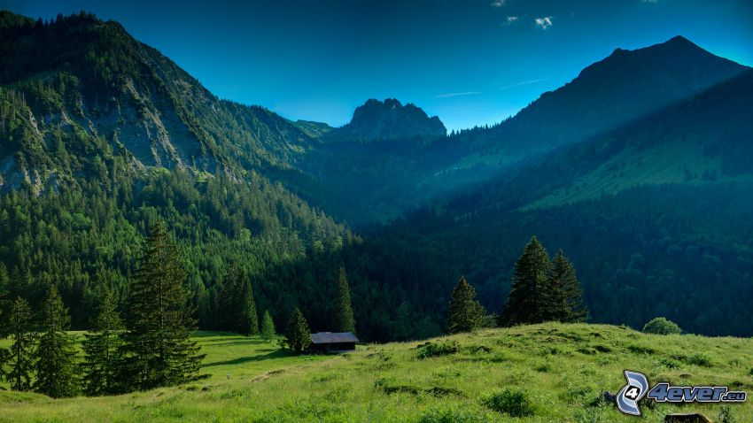 berg, äng