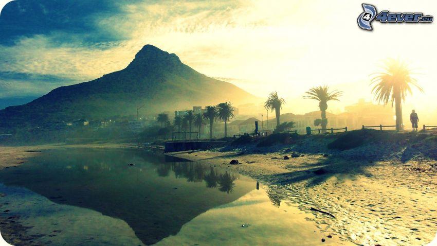 berg, palmer, vatten