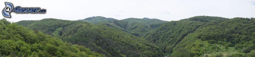 bergskedja, skog, panorama
