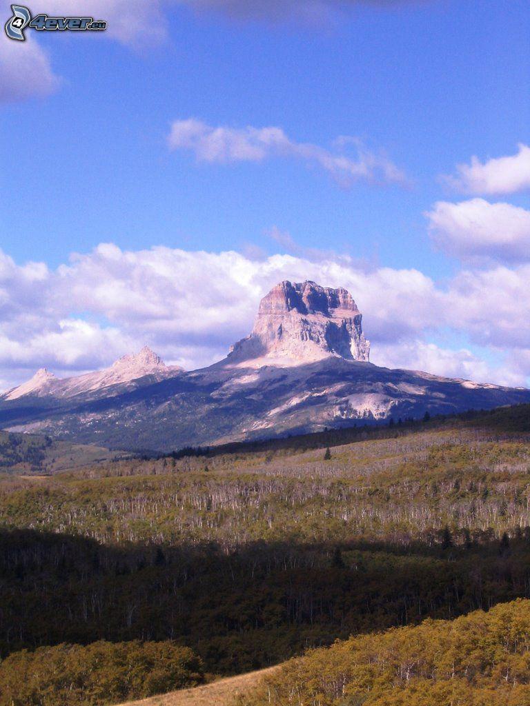 Chief Mountain, skog