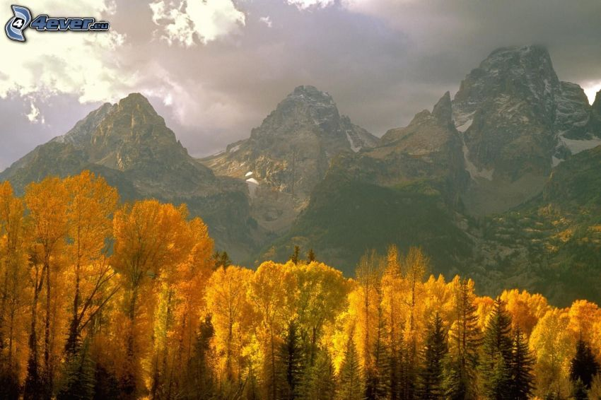 Grand Teton National Park, Wyoming, berg, skog, gula träd, höst