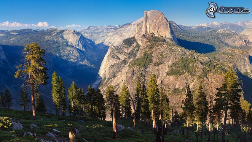Half Dome, Yosemite National Park, klippiga berg, träd, skog
