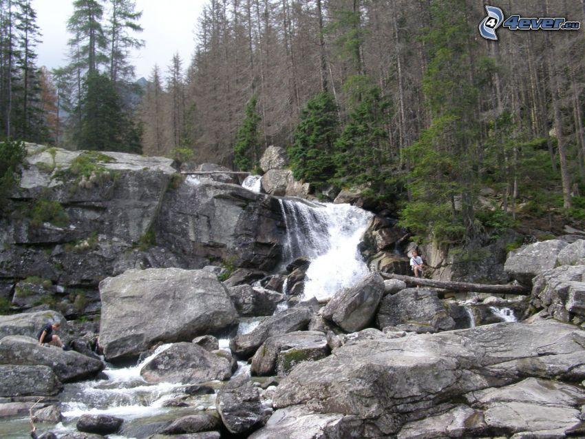 Höga Tatras, klippor, bergsbäck, skog