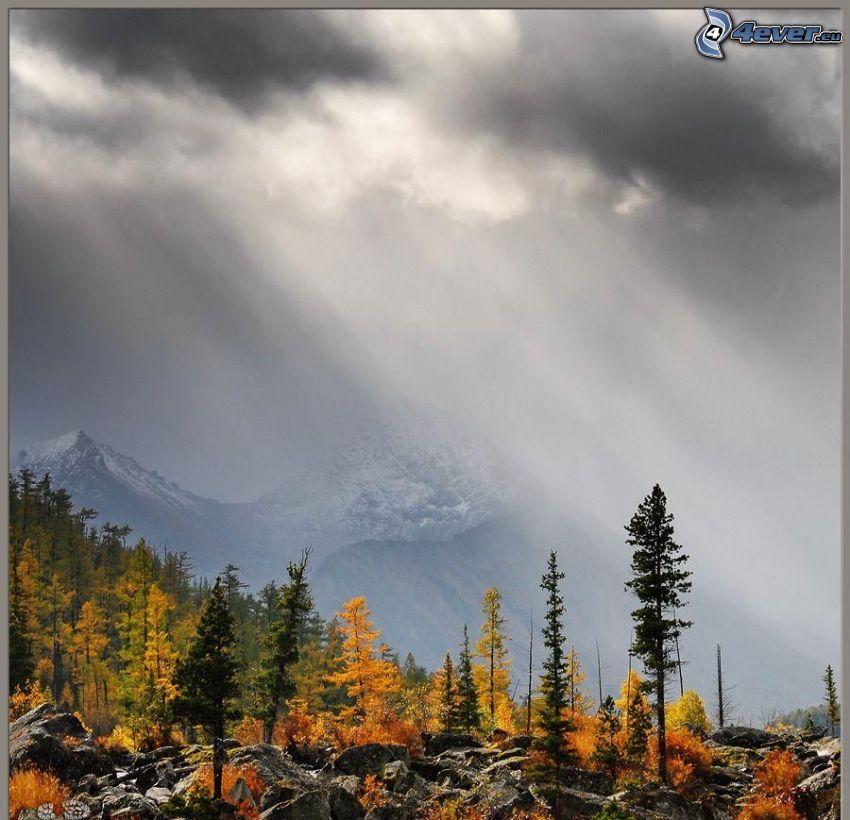 höstträd, klippor, snöklädda berg, dimma, moln