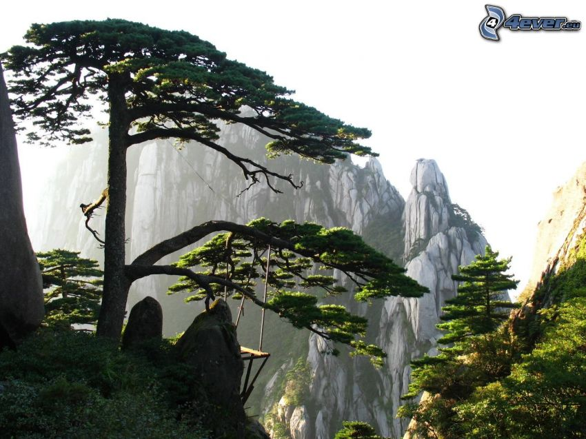 Huangshan, klippiga berg, gröna träd