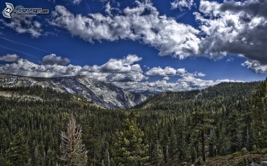 klippiga berg, barrskog, HDR