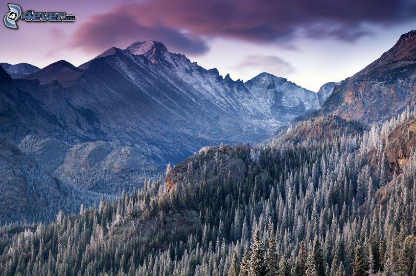 klippiga berg, barrträd