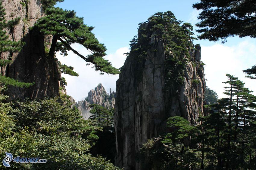 klippiga berg, Huangshan, träd
