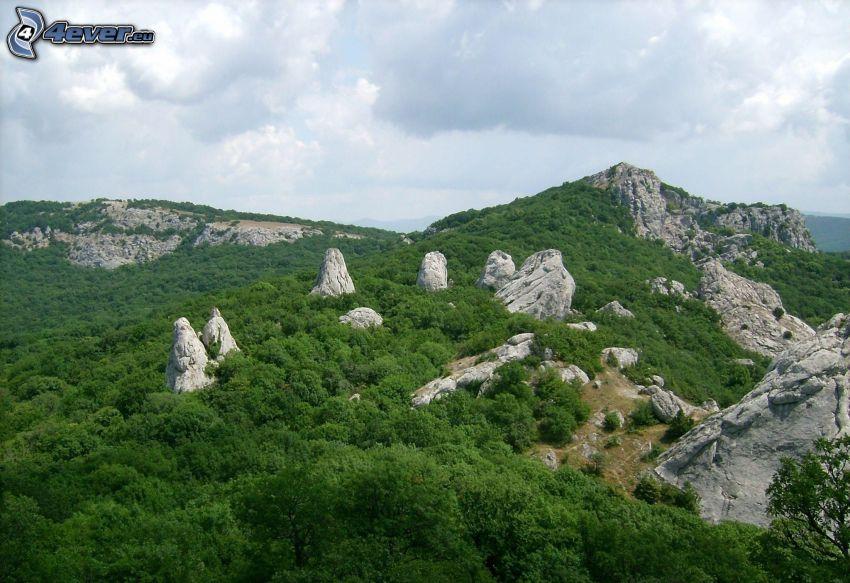 klippiga berg, skog