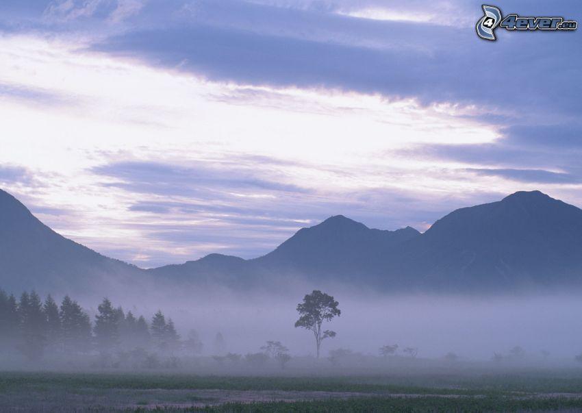 kullar, markdimma, träd