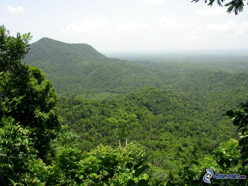 kullar, skog