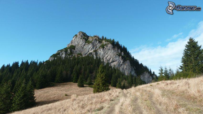 Lilla Rozsutec, Slovakien, kulle, skog, äng