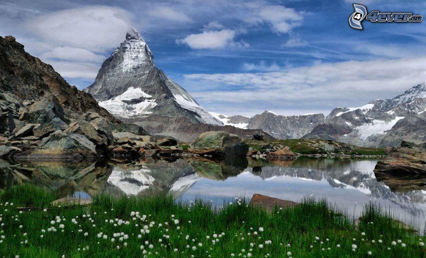 Matterhorn, tjärn, klippiga berg, snöklädda berg, avblommade maskrosor, gräs