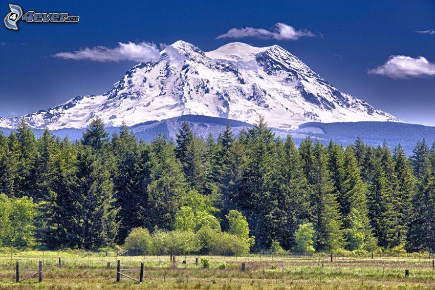 Mount Adams, barrskog, snöigt berg