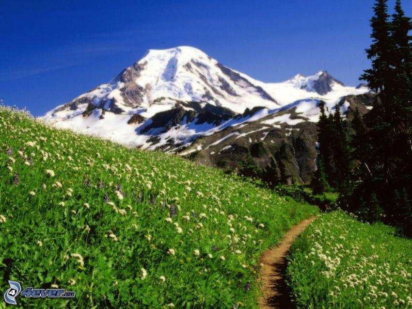 Mount Baker, Snoqualmie National Forest, snöig backe, grön äng, trottoar, barrskog