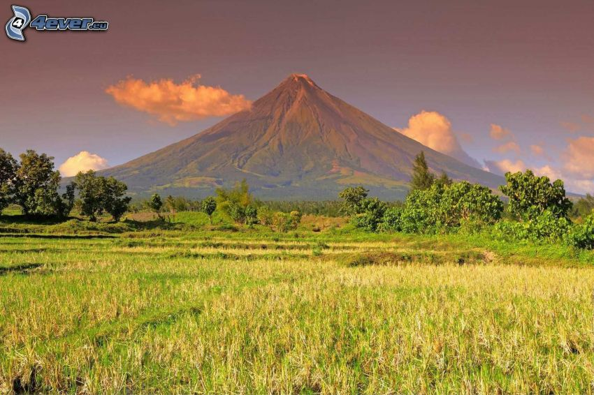 Mount Mayon, Filippinerna, äng