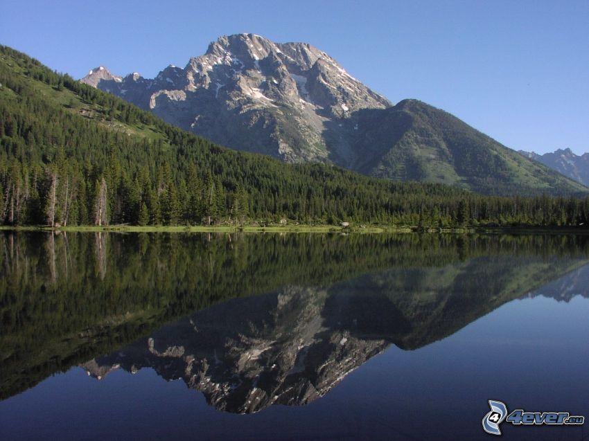 Mount Moran, Wyoming, sjö, spegling, barrskog, klippigt berg