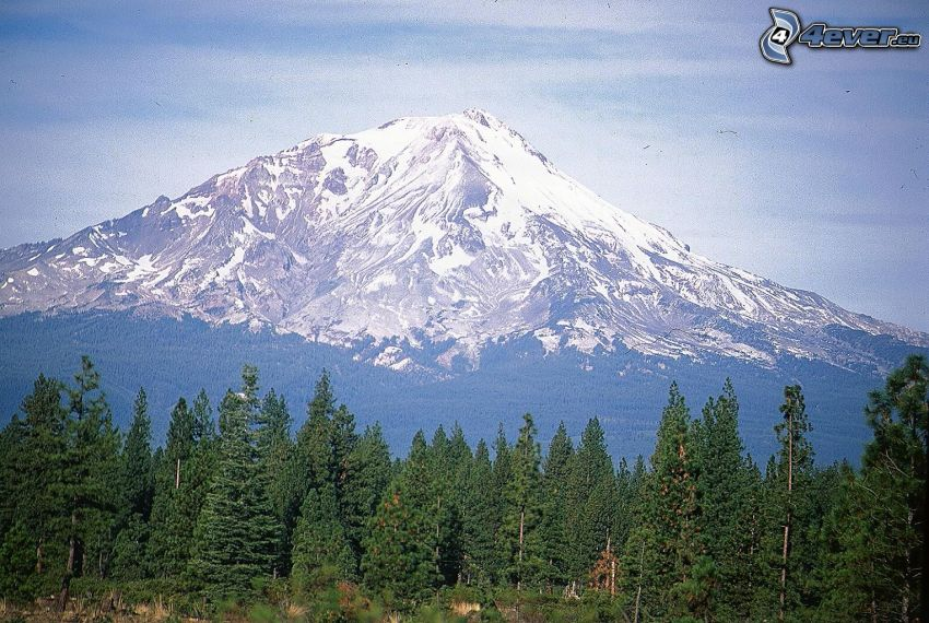 Mount Shasta, snöigt berg, skog