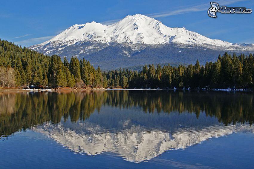 Mount Shasta, tjärn, skog, spegling, snöigt berg