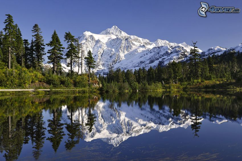 Mount Shuksan, snöigt berg, sjö, spegling, skog