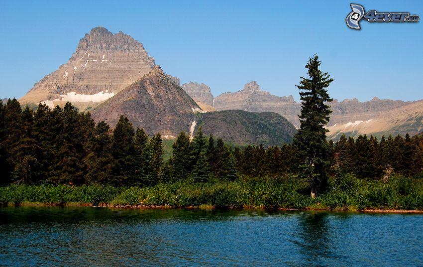 Mount Wilber, flod, skog