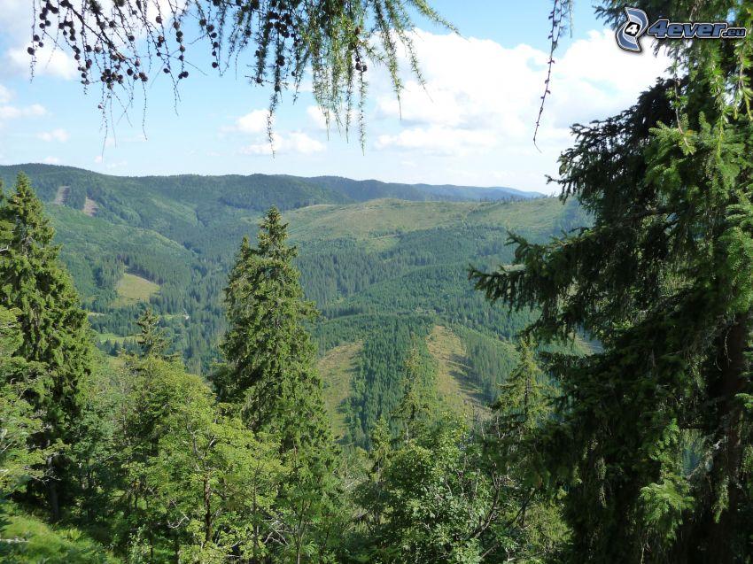 Muránska planina, Slovakiska malmbergen, skog