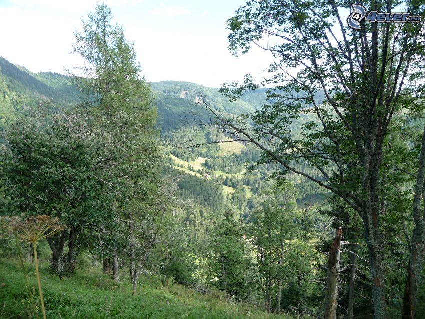 Muránska planina, Slovakiska malmbergen, stuga, skog, träd