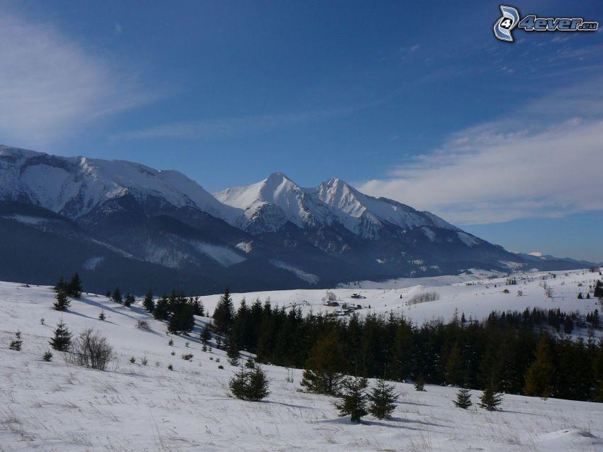 natur, berg