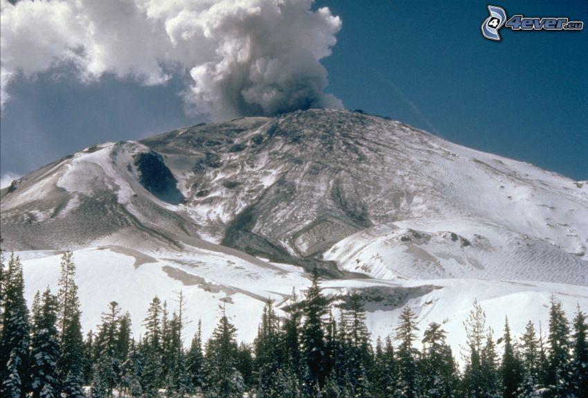 Saint Helens, vulkan, snöig skog