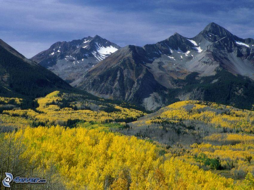 San Juan Mountains, Colorado, berg, kullar, skog