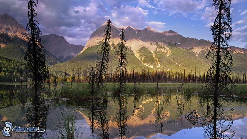 sjö, klippiga berg, döda träd, spegling