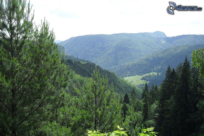 skog, dal