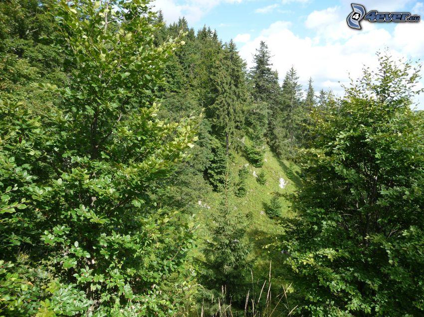 skog, Muránska planina