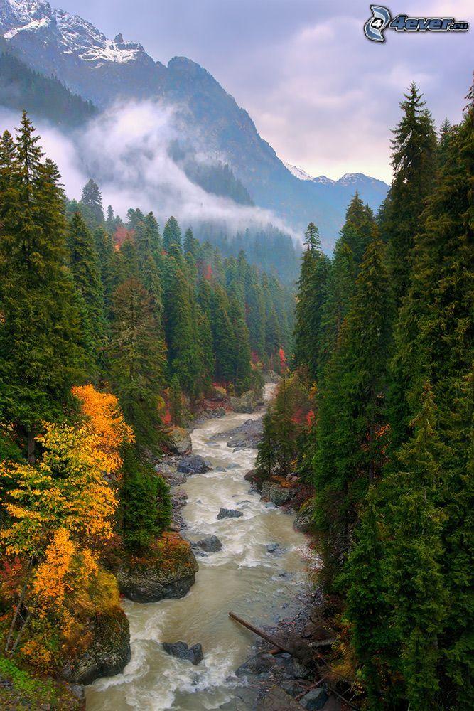 skogsbäck, färggranna träd, barrskog, höga berg, snöklädda berg