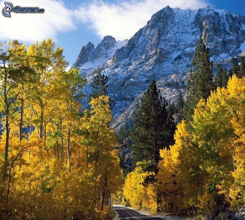 skogsväg, höga berg, gula träd