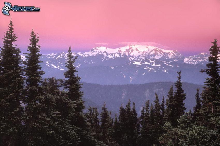 snöig bergskedja, barrskog, rosa himmel