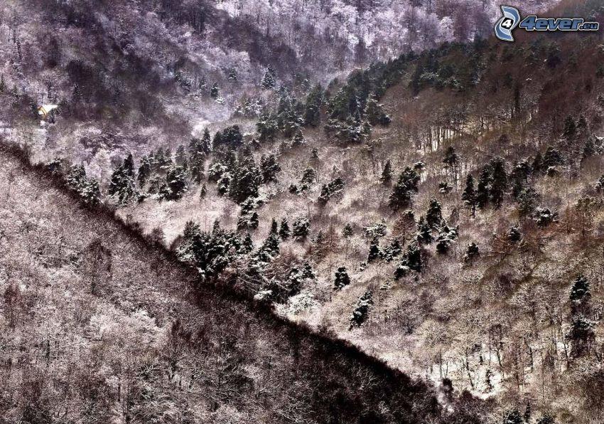 snöiga kullar, träd