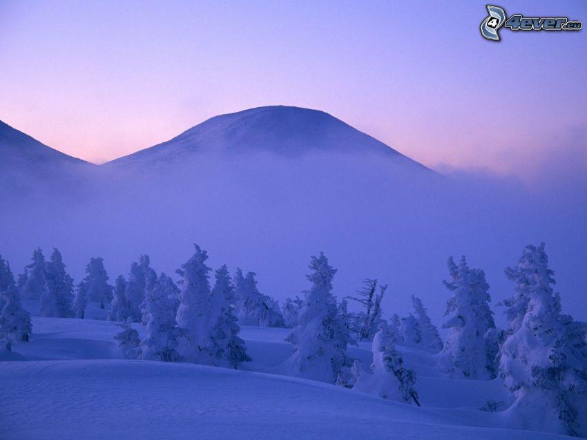 snöigt berg, snöklädda träd