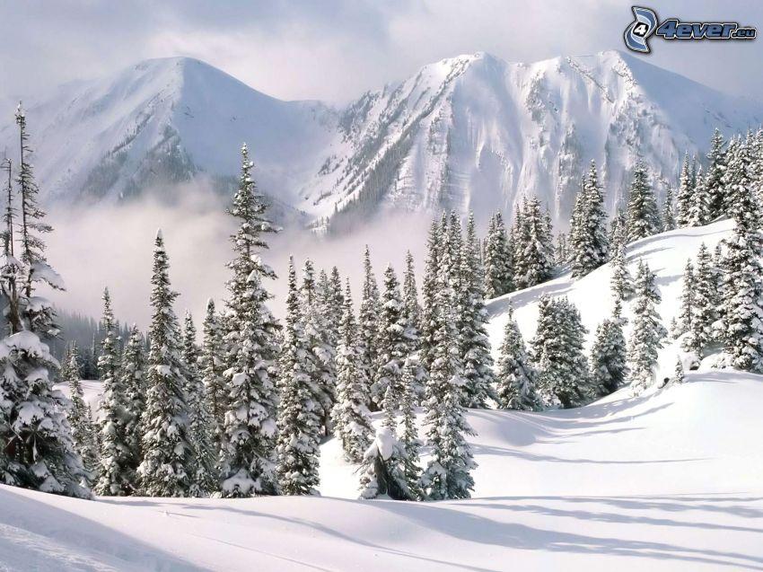 snöklädda berg, skog, snö, vinter