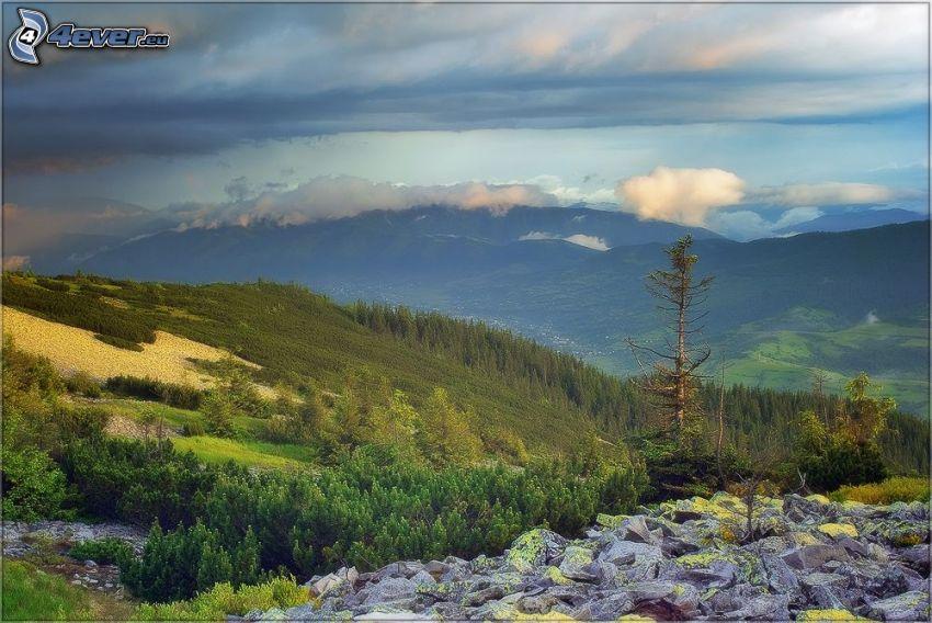 torrt träd, kullar, klippor