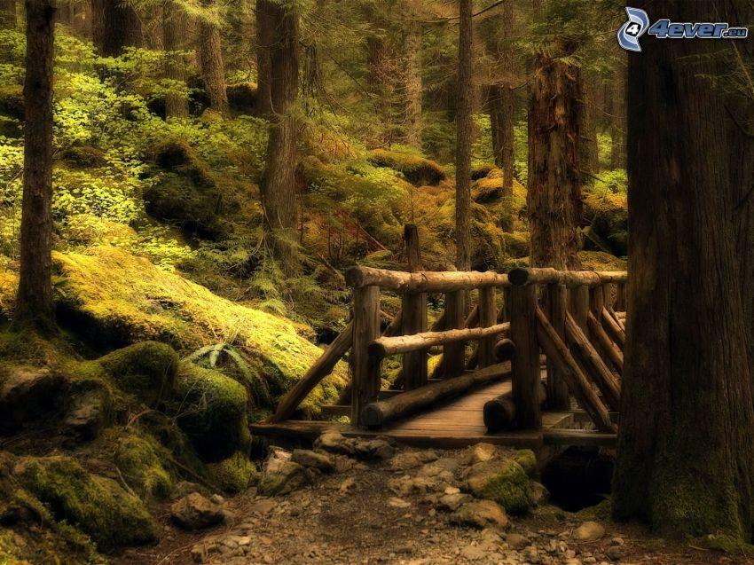 träbro i skogen, trottoar, natur