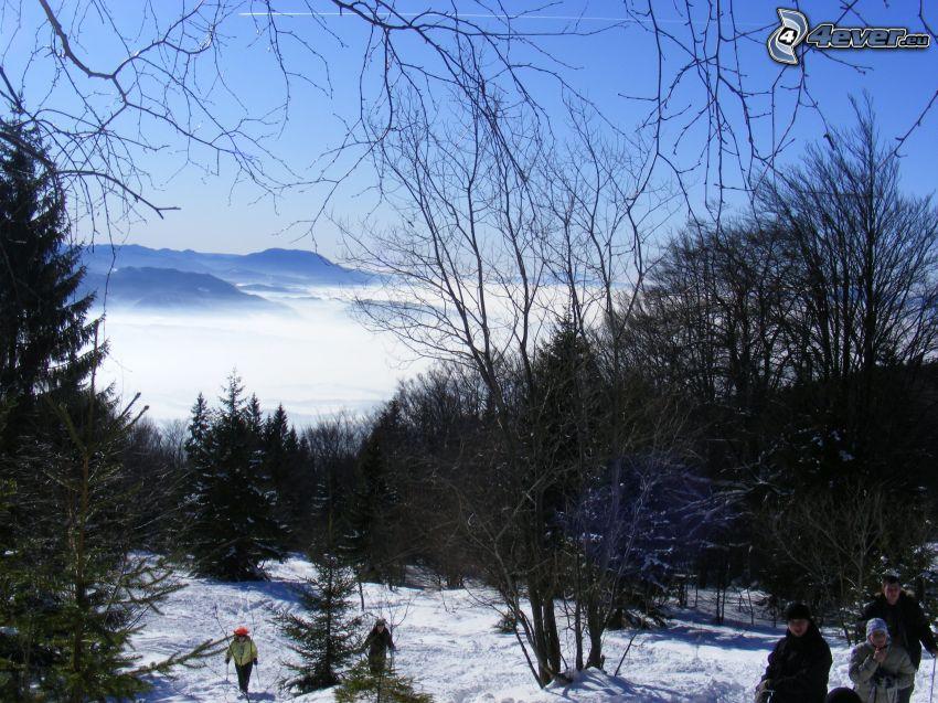 turister, skog, barrträd, snö, berg, inversion
