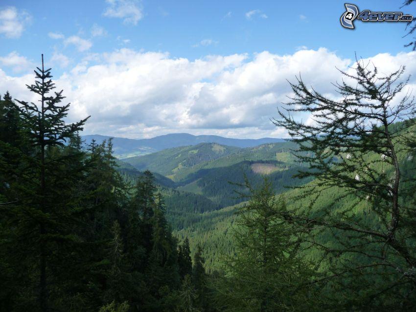 utsikt över landskap, skog, Malá Stožka, Slovakiska malmbergen