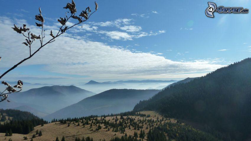 utsikt över landskap, skog, moln, kullar, kvist