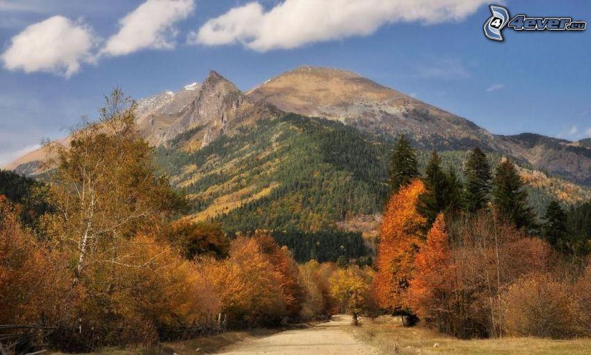väg, färgglada höstträd, barrträd, kullar