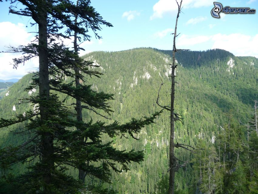 Veľká stožka, skog, Muránska planina, Slovakiska malmbergen