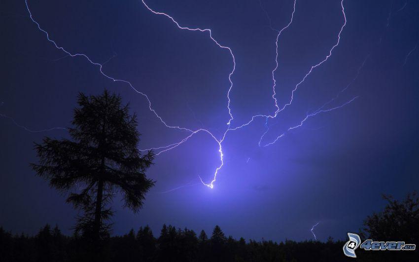 blixt, siluett av ett träd, storm