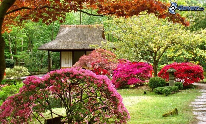blommande buskar, hus