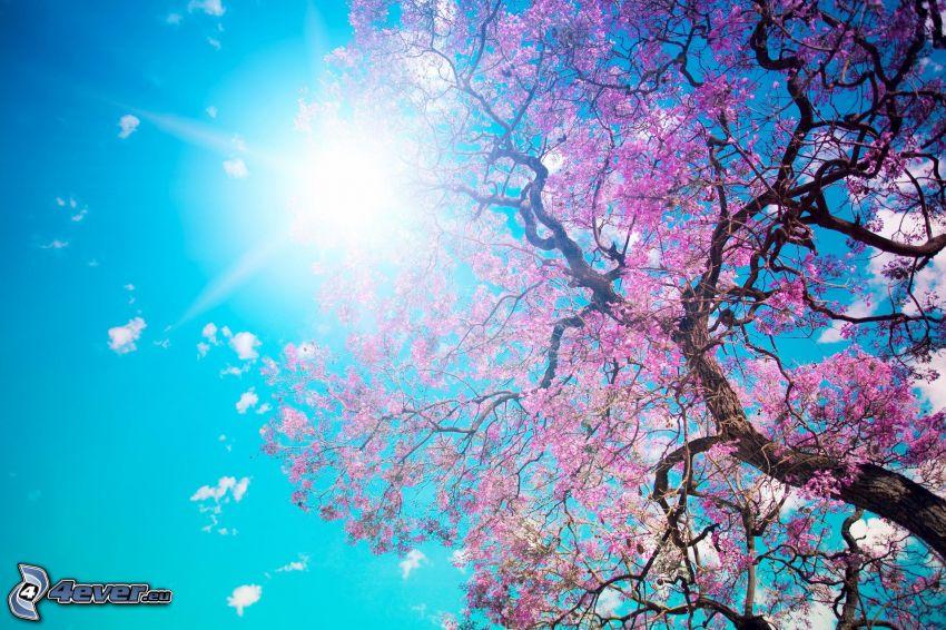 blommande träd, sol