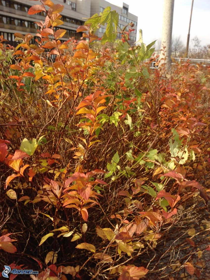 buske, byggnad, höstlöv